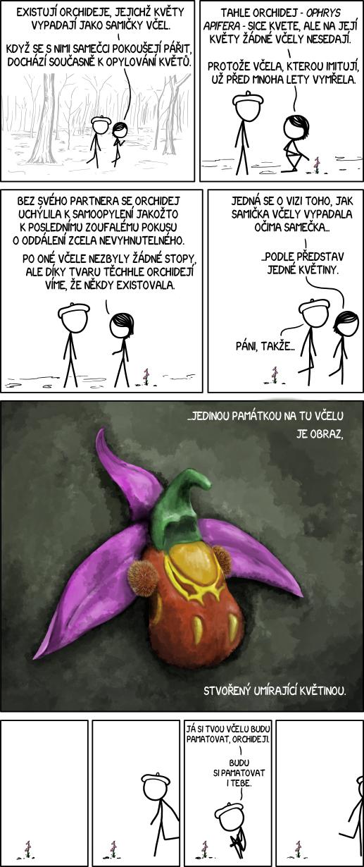 Včelí orchidej